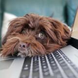 Hund mit dem Kopf auf einer Tastatur