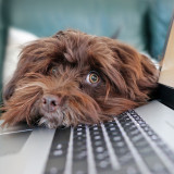 Hunde jetzt online anmelden