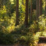 Der Stadtwald rund um Freudenstadt - NaturErlebnis
