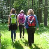 Drei Wanderer im Schwarzwald