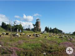 Der höchste Punkt im Nordschwarzwald - die Hornisgrinde
