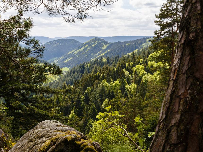 Blick ins Tal in der Nationalparkregion Schwarzwald